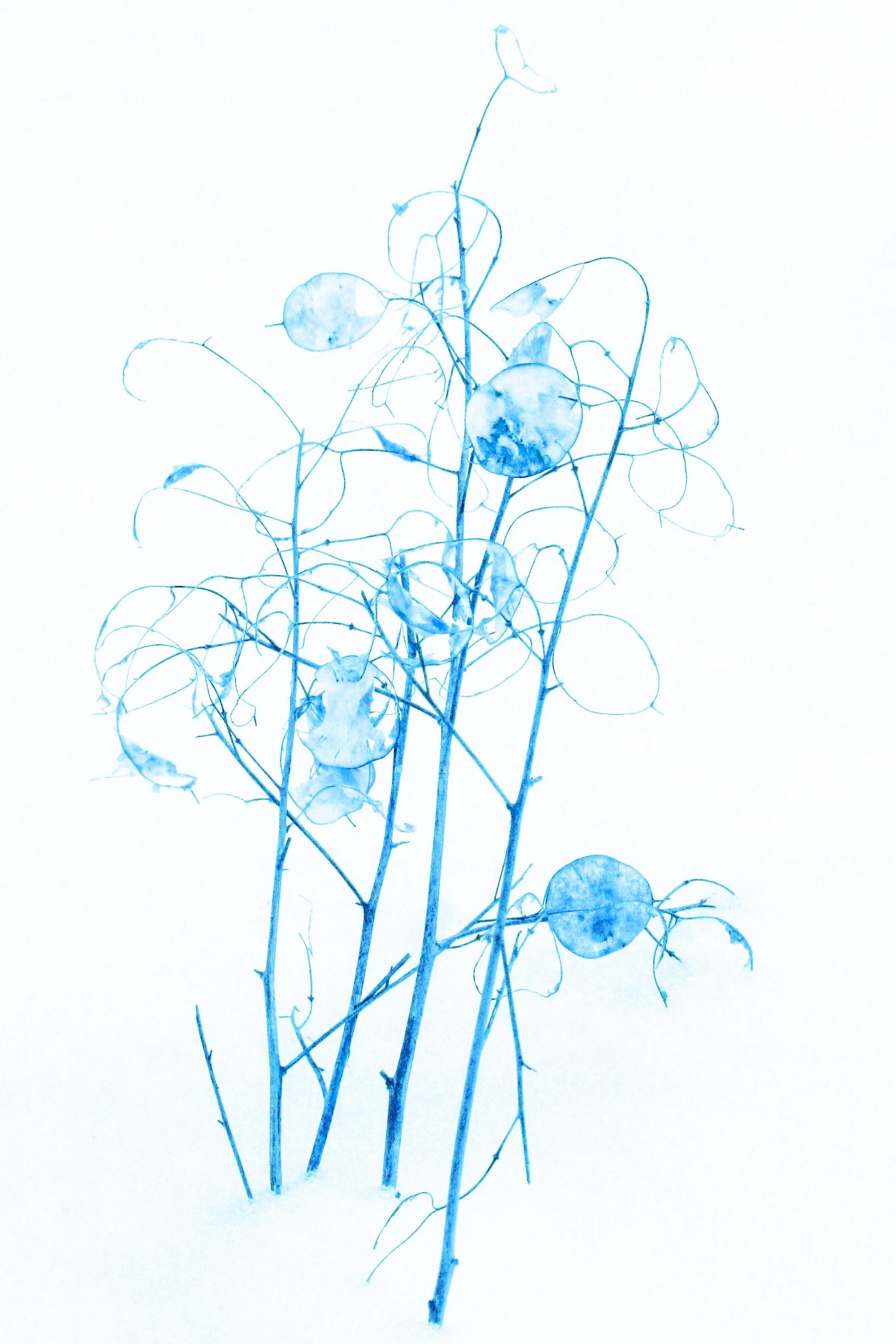 winterblau